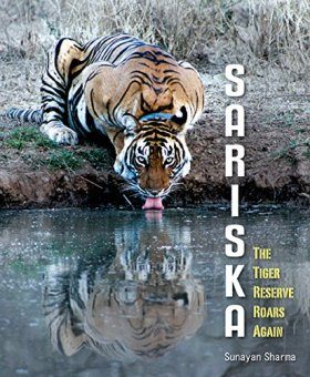 Sariska: The Tiger Reserve Roars Again