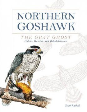 Northern Goshawk, the Gray Ghost