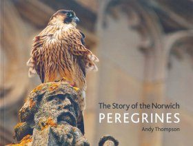The Story of the Norwich Peregrines