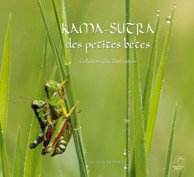 Kama-Sutra des Petites Bêtes [The Kama Sutra of Little Bugs]