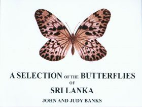 A Selection of the Butterlies of Sri Lanka