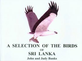 A Selection of the Birds of Sri Lanka