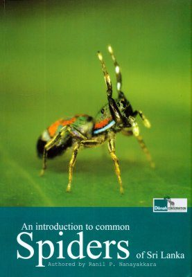 An Introduction to Common Spiders of Sri Lanka
