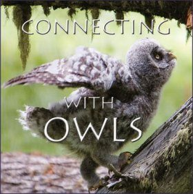 Connecting with Owls - DVD (All Regions)