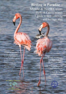 Birding in Paradise – Middle & North Caicos