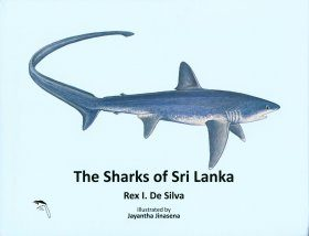 The Sharks of Sri Lanka