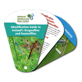 Identification Guide to Ireland's Dragonflies and Damselflies