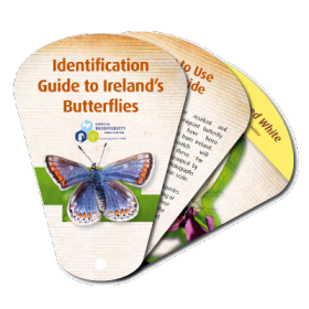 Identification Guide to Ireland's Butterflies