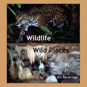 Wildlife, Wild Places