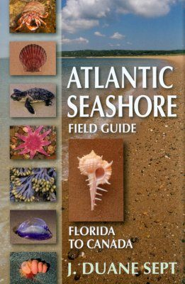 Atlantic Seashore Field Guide