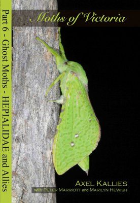 Moths of Victoria, Part 6: Ghost Moths – Hepialidae and Allies