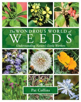 The Wondrous World of Weeds