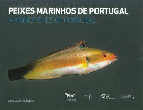 Marine Fishes of Portugal / Peixes Marinhos de Portugal