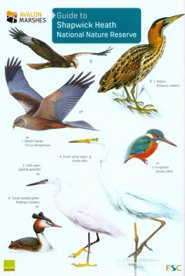 Guide to Shapwick Heath National Nature Reserve