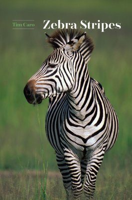 Zebra Stripes
