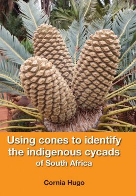 Using Cones to Identify the Indigenous Cycads of South Africa