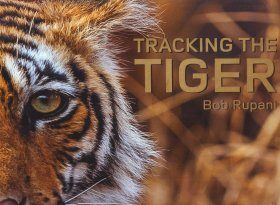 Tracking the Tiger