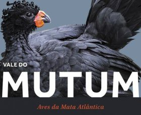 The Valley of Mutum: Atlantic Forest Birds / Vale do Mutum: Aves da Mata Atlântica [English / Portuguese]