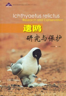 Ichthyaetus relictus Research and Conservation [Chinese]