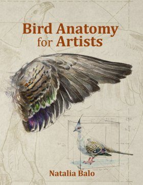 Bird Anatomy for Artists