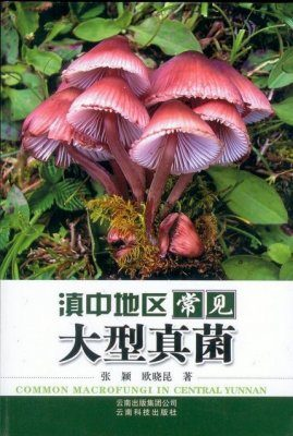 Common Macrofungi in Central Yunnan [Chinese]