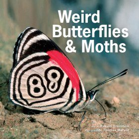 Weird Butterflies & Moths