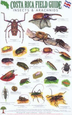 Costa Rica Field Guide: Insects & Arachnids [English / Spanish]