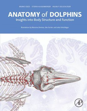 Anatomy of Dolphins