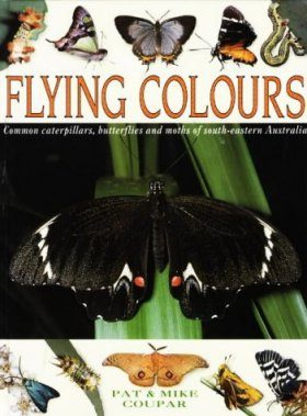 Flying Colours: Common Butterflies, Moths and Caterpillars of South East Australia