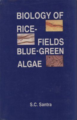 Biology of Rice Fields Blue-Green Algae