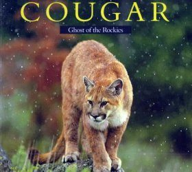 Cougar: Ghost of the Rockies