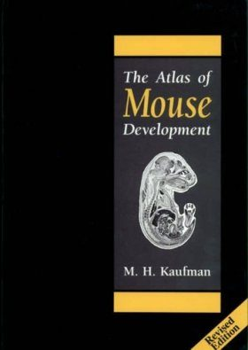 The Atlas of Mouse Development