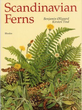 Scandinavian Ferns