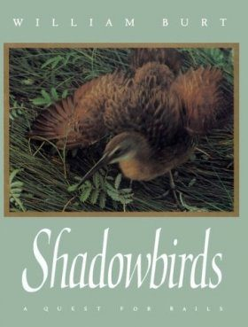 Shadowbirds: A Quest for Rails