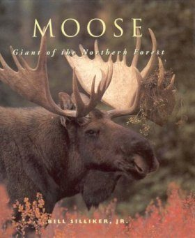 Moose: Giants of the Northern Forests