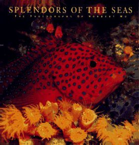 Splendours of the Seas