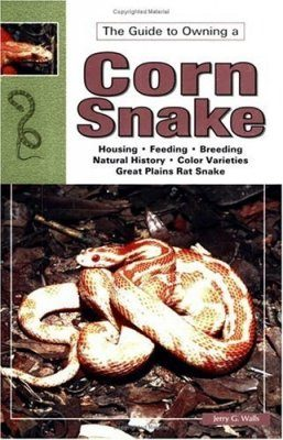 Corn and Red Rat Snakes
