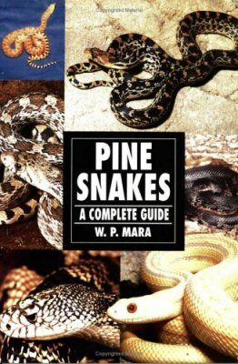 Pine Snakes: A Complete Guide