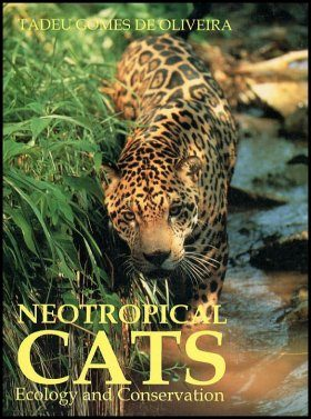 Neotropical Cats