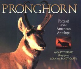Pronghorn: Portrait of the American Antelope