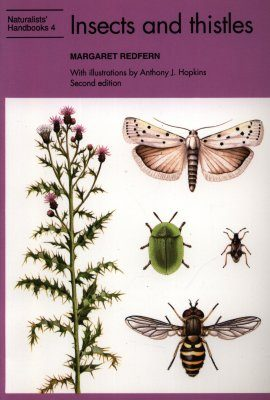 Insects and Thistles