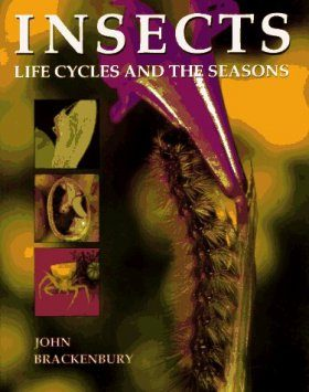 Insects: Life Cycles and the Seasons