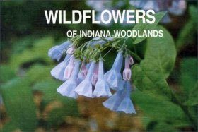 Wildflowers of Indiana Woodlands