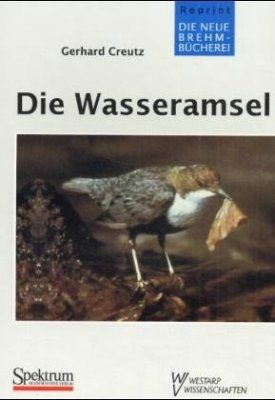 Die Wasseramsel (White-throated Dipper)