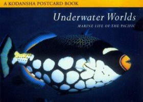 Underwater Worlds: Marine Life in the Pacific