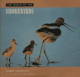 The World of the Shorebirds