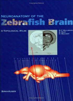 Neuroanatomy of the Zebrafish Brain