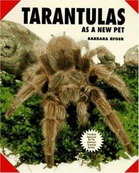 Tarantulas as a New Pet