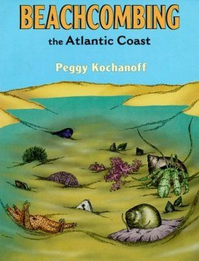 An Introduction to Beachcombing the Atlantic Coast