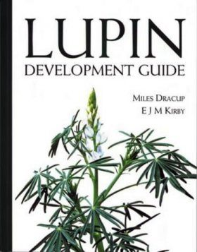 Lupin Development Guide